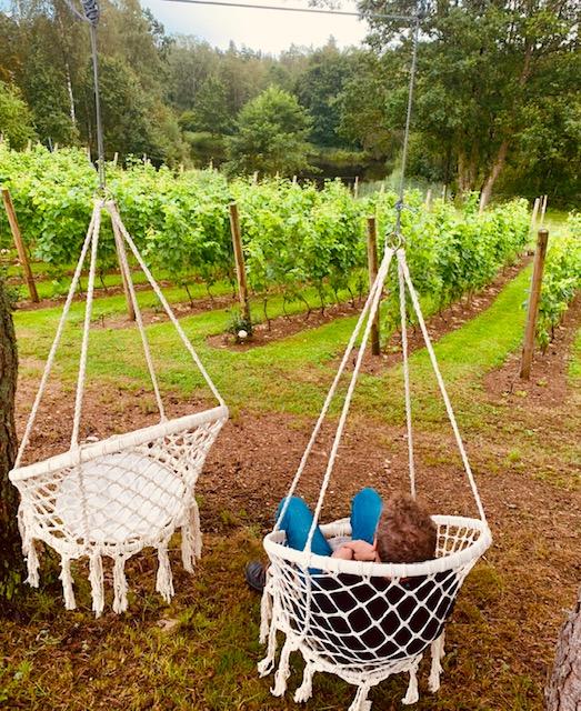 Vingård picknick